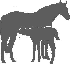 Altena Horses